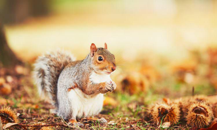 秋のヘアケア:抜け毛とかゆみ、秋の悩みは保湿とメンタル、インナーケアがカギ!