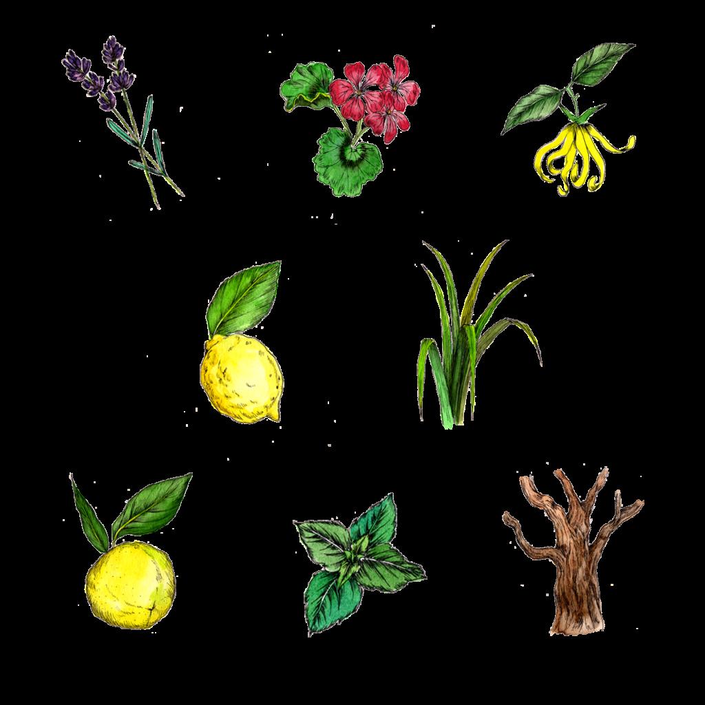 uruotte シャンプー ノーブルフラワー 配合植物