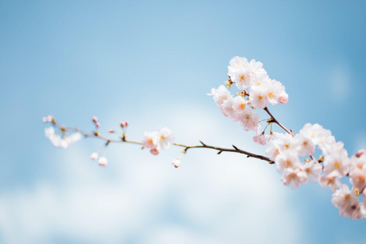 春の環境変化、知らずのうちに溜まったストレスサインは頭皮に現れる?!