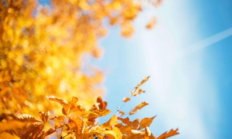 初秋は、抜けにくくて傷みにくい強い美髪づくりの始め時